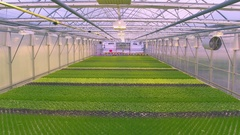Aerial - Herb cultivation in greenhouse hydroponics Stock Footage