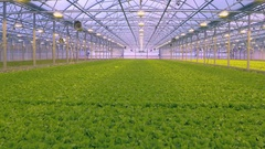 Aerial - Fresh organic lettuce growing in a greenhouse hydroponics Stock Footage