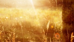 Golden Sunrise Motion Background Stock Footage