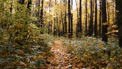 Pathway in the autumn forest Stock Footage