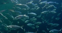 Deep Ocean Fish In Large Aquarium Stock Footage