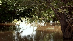 African lake. Ancient trees sprout out of the water. great detail African flora Stock Footage