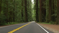 Humboldt Redwoods State Park driving, California Stock Footage