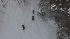 Deer in winter forest run away from drone 4k Stock Footage