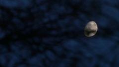 Half moon floating on lake. Stock Footage