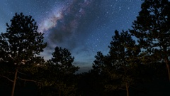 Trees and Milky Way stars at night. Elements of this image furnished by NASA Stock Footage
