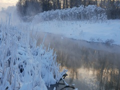 River and coastal thickets in frosty day Stock Footage