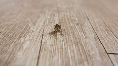 Macro shot of a brown shield bug on a piece of wood Stock Footage
