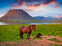 Summer eveninh scene with horses on pasture. Stock Photos
