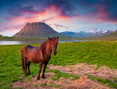 Summer eveninh scene with horses on pasture Stock Photos