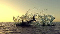 Sunset shark jump out of water Stock Footage