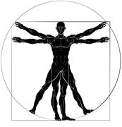 Vitruvian Man Da Vinci Style Figure Stock Illustration