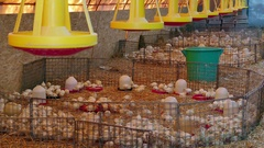 Farm for breeding poultry Stock Footage