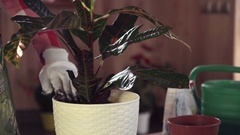 Gardener tending plant in pot Stock Footage