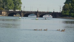 Five brown geese crossing the river  in Ireland Stock Footage
