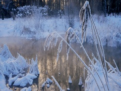 Dry coastal thickets on the river in frosty day Stock Footage