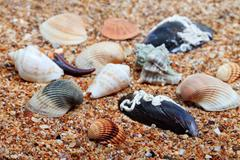 Seashells on sand in sunny day Stock Photos