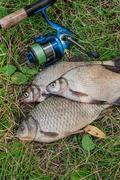 Several common bream fish, crucian fish, roach fish, bleak fish on the natu.. Stock Photos