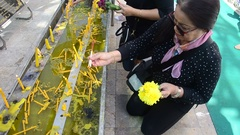Asian people thai old woman praying gold chedi of Wat Phra That Cho Hae Stock Footage