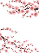 Spring background with cherry blossom. EPS 10 Stock Illustration