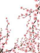 Delicate pink sakura cherry blossoms. EPS 10 Stock Illustration