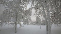 Beautiful trees, covered by snow in winter Stock Footage