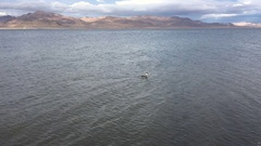 Western Grebe Pyramid Lake Nevada Stock Footage