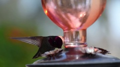 Male hummingbird at feeder Stock Footage