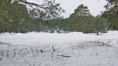 Trees forest christmas tree, snow frost cold winter landscape nature Stock Footage