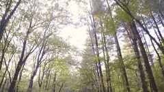 Tilt down while driving with car under tall forest trees towards light 4K Stock Footage