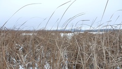 Dry the grass marsh winter nature reed beautiful landscape Stock Footage