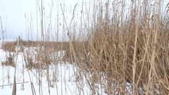 Dry the grass marsh winter reed beautiful landscape nature Stock Footage