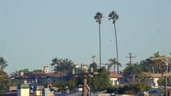 Two twin palm trees stand tall over a town. Stock Footage