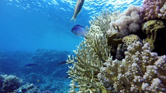 Coral reef. The marine life of tropical fish. Video under water. Stock Footage