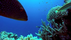 The marine life of tropical fish. Video under water. Coral reef. Stock Footage