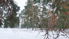 Trees forest christmas tree, snow nature frost cold landscape the winter Stock Footage