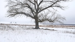 Dry the grass marsh winter reed beautiful nature cold landscape Stock Footage