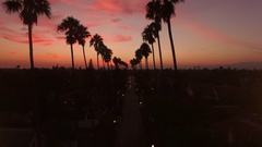 Flying forward down rows of Palm Trees at sunset with pink clouds Stock Footage
