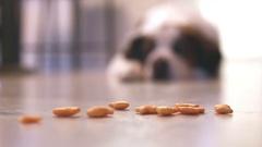Saint Bernard dog with treats, video Stock Footage