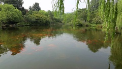 Beautiful, calm koi pond in West Lake, Hangzhou, China Stock Footage