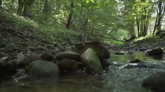Beautiful green forest with gimbal, trees, river Stock Footage