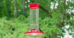 Female Ruby Throated Hummingbird Drinks Nectar from Feeder Stock Footage