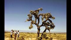 Cactus tree Yosemite Stock Footage