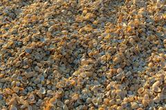 Shell beaches on the Sea of Azov. Karalar regional landscape park in Crimea Stock Photos