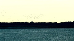 Flock of flying birds above water of lake, river or harbor Stock Footage