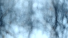 Snow falling on blurry background with trees Stock Footage