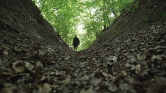 Beautiful green forest with gimbal, trees, man walking Stock Footage