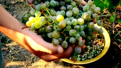 Human hands gathering grapes Stock Footage