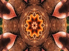 Kaleidoscopic abstract video Stock Footage