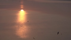 Flocks of Birds Flying Over The River Sun Shining in Water Surface 4K Stock Footage